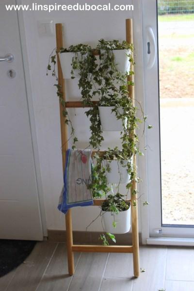 linspiree-du-bocal-les-plantes-vertes-crevees